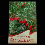 Benih Goji Berry (Wolfberry) 60 Biji – Retail Asia