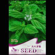 Benih Large Leaf Sweet Basil 50 Biji – Retail Asia