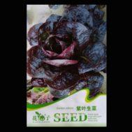 Benih Purple Garden Lettuce 30 Biji – Retail Asia