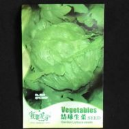 Benih Selada Lettuce Head Green 160 Biji – Retail Asia