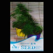 Benih Setose Asparagus 6 biji – Retail Asia