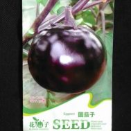 Benih Terong Purple Round Eggplant 20 biji – Retail Asia