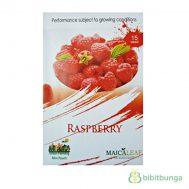 Benih Raspberry Merah 15 Biji – Maica Leaf