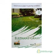 Benih Rumput Gajah (Elephant Grass) 50 Biji – Maica Leaf