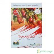 Benih Terong Belanda (Tamarillo) 15 Biji – Maica Leaf