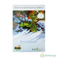 Benih Blueberry 15 Biji – Maica Leaf