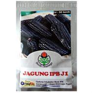 Benih Jagung Hitam IPB J1 50 Biji – Dramaga