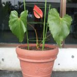 Penyangga Tanaman Powerful No.4 – 45 cm