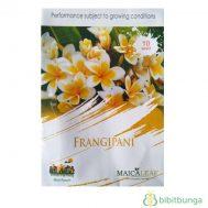 Benih Kamboja / Plumeria Frangipani 10 Biji – Maica Leaf