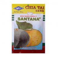 Benih Labu Santana F1 10 Gram – Kapal Terbang