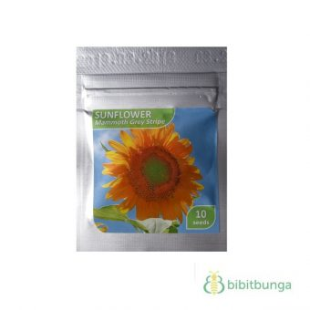 Benih Sunflower Mammoth Grey Stripe 10 Biji – Kemasan Foil