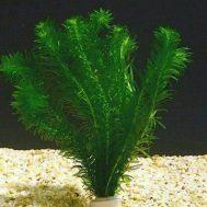 Tanaman Aquascape Hydrilla – 5 Pcs