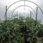 Plant Stake (Ajir Tanaman) 11mm x 75cm – Takiron