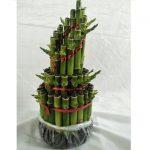 Tanaman Bambu Hoki Runcing 3T