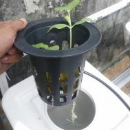 Netpot / Net Pot Hidroponik Dutch Bucket 15 cm – Hitam