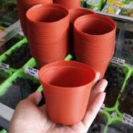 Pot Bunga / Tanaman Coklat 8,5 cm
