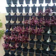 Pot Vertical Garden / Vertical Kultur (Green Wall)